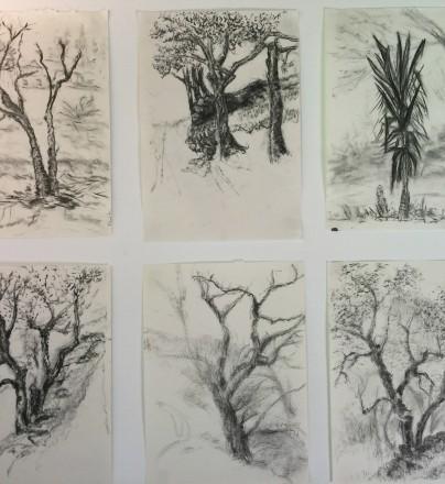 5 Dias de Desenho na Natureza